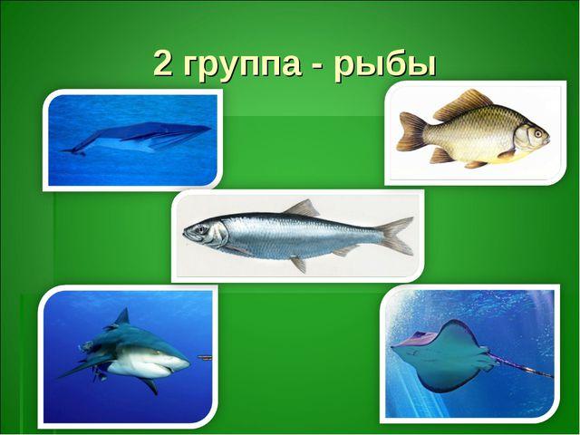 2 группа - рыбы