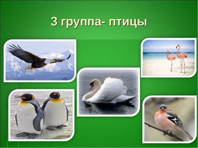 3 группа- птицы