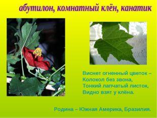 Виснет огненный цветок – Колокол без звона, Тонкий лапчатый листок, Видно взя