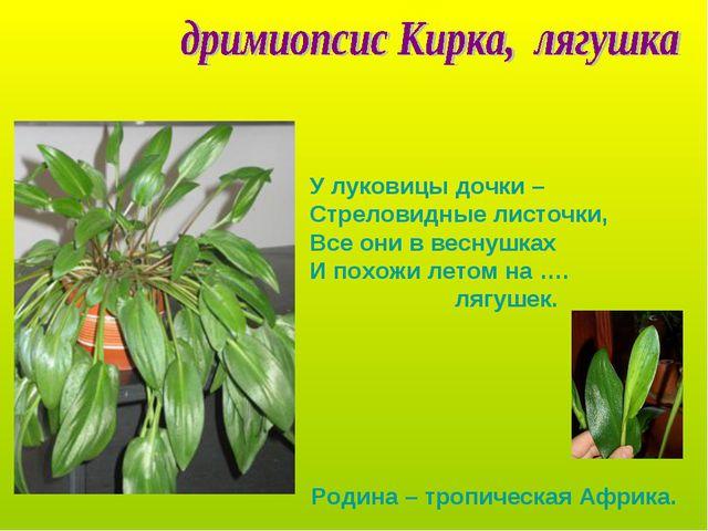 У луковицы дочки – Стреловидные листочки, Все они в веснушках И похожи летом...