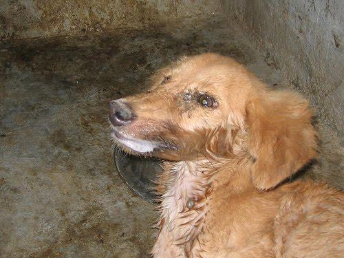 http://2.bp.blogspot.com/_gQbLhYQDz7U/TIm9pOSOZVI/AAAAAAAADtU/kx-wyMoXWxk/s1600/rabies+dog+2.jpg