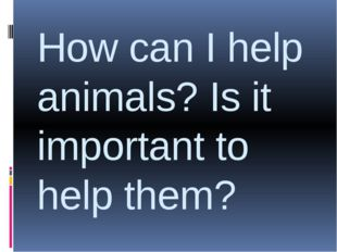 How can I help animals? Is it important to help them?