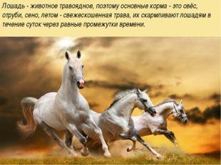 Лошадь - животное травоядное, поэтому основные корма - это овёс, отруби, сен