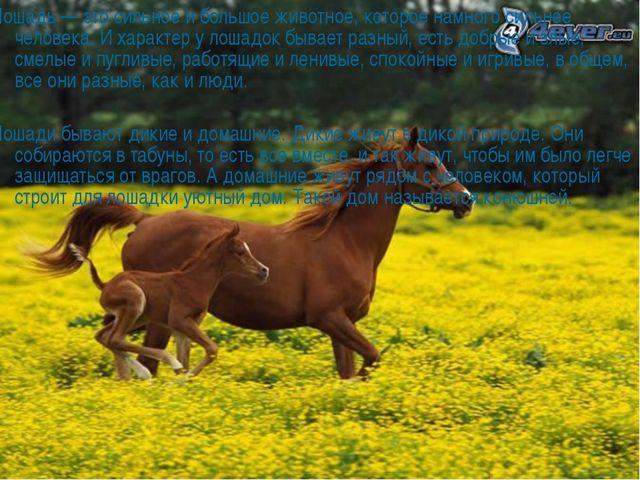 Лошадь — это сильное и большое животное, которое намного сильнее человека. И...