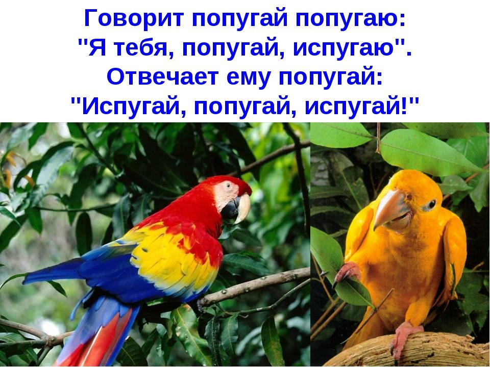 картинки говорит попугай попугаю этого рецепта том