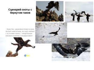 Сценарий охоты с беркутом таков : беркутчи, удерживая птицу на руке, пускает