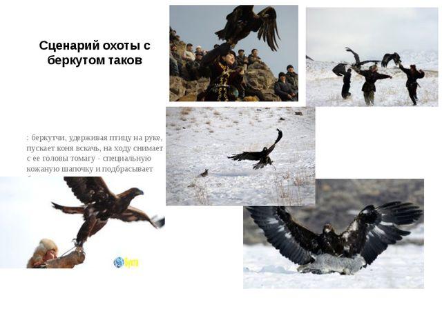 Сценарий охоты с беркутом таков : беркутчи, удерживая птицу на руке, пускает...