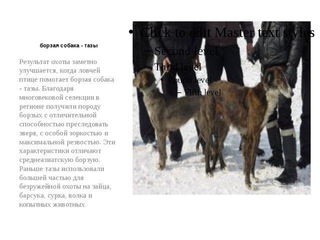борзая собака - тазы Результат охоты заметно улучшается, когда ловчей птице...