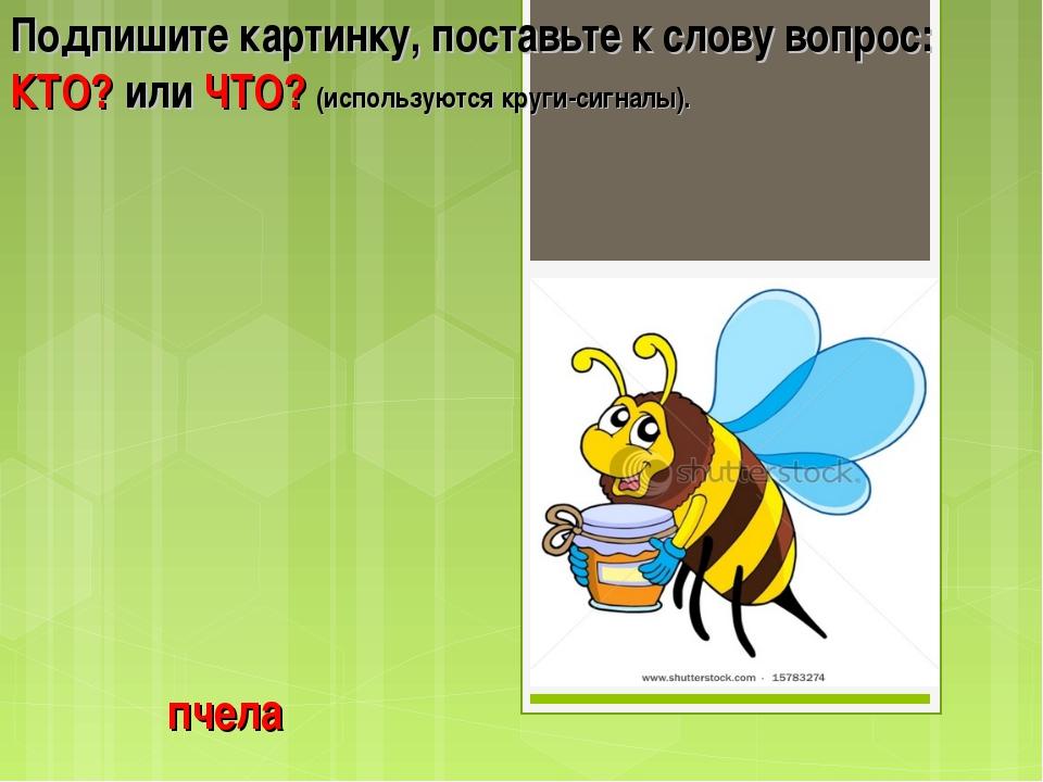 пчела Подпишите картинку, поставьте к слову вопрос: КТО? или ЧТО? (используют...