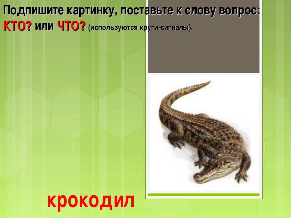 крокодил Подпишите картинку, поставьте к слову вопрос: КТО? или ЧТО? (использ...