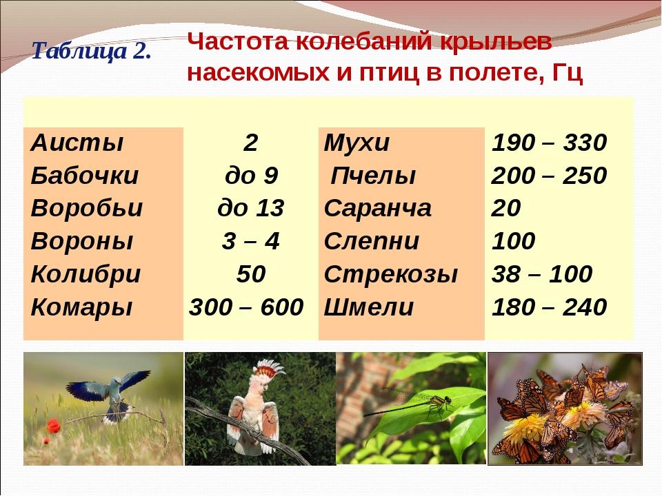 Таблица 2. Частота колебаний крыльев насекомых и птиц в полете, Гц  Аист...