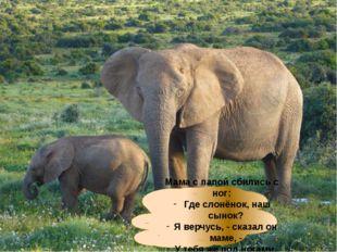 Мама с папой сбились с ног: Где слонёнок, наш сынок? Я верчусь, - сказал он м