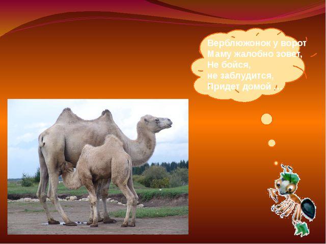 Верблюжонок уворот Маму жалобно зовет, Небойся, незаблудится, Придет домо...