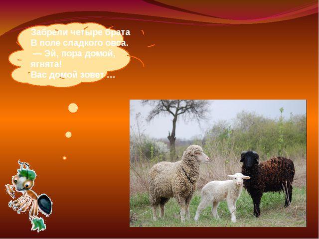 Забрели четыре брата Вполе сладкого овса. —Эй, пора домой, ягнята! Вас до...