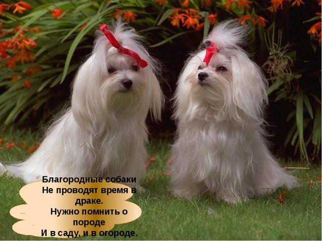 Благородные собаки Не проводят время в драке. Нужно помнить о породе И в саду...