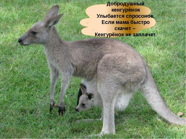 Добродушный кенгурёнок Улыбается спросонок. Если мама быстро скачет – Кенгурё...