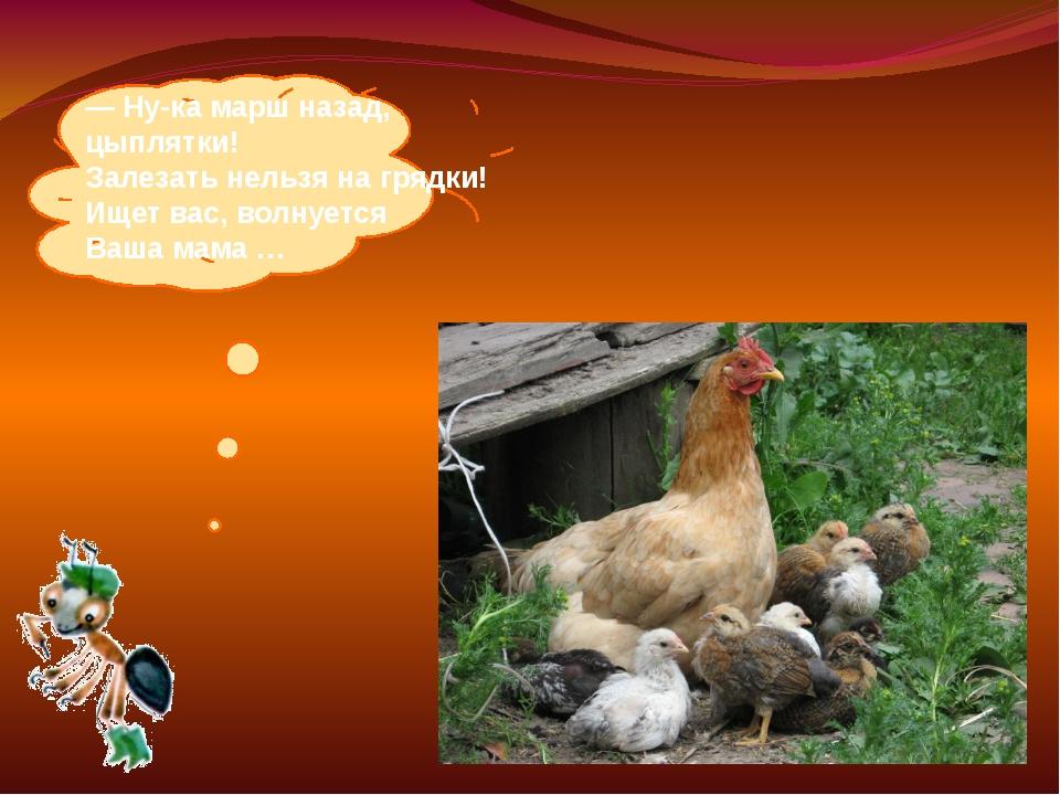 —Ну-ка марш назад, цыплятки! Залезать нельзя нагрядки! Ищет вас, волнуется...