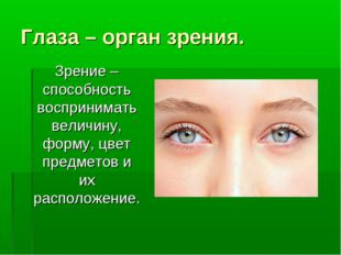 Глаза – орган зрения. Зрение – способность воспринимать величину, форму, цвет