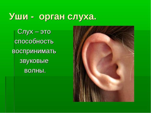 Уши - орган слуха. Слух – это способность воспринимать звуковые волны.