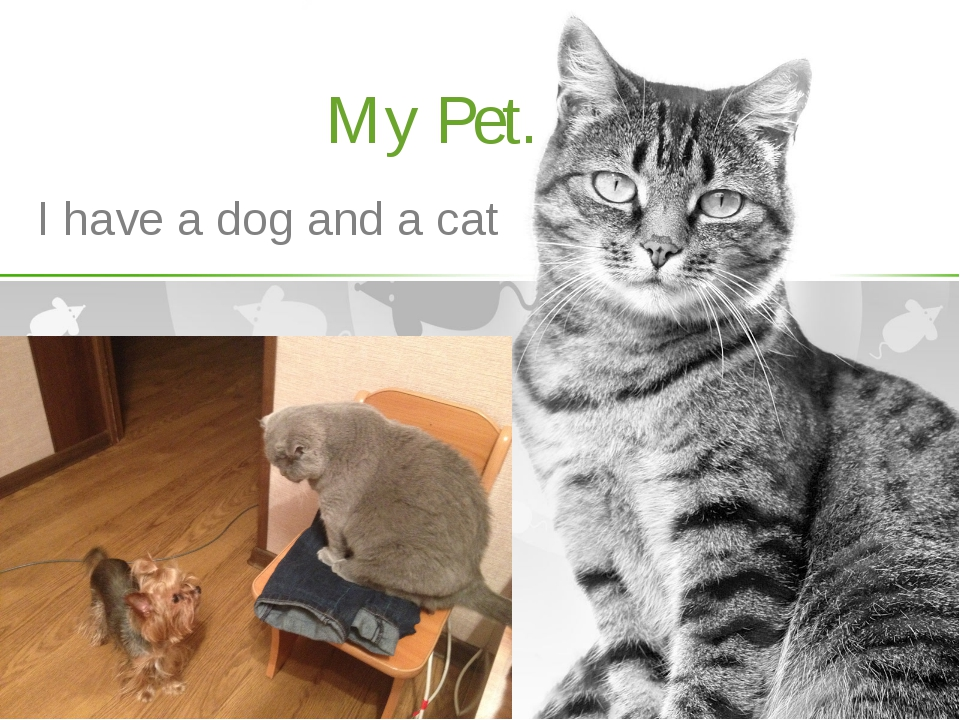 My Pet. I have a dog and a cat