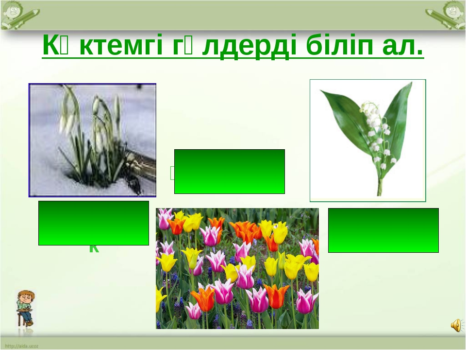 Көктемгі гүлдерді біліп ал. Бәйшешек Қызғалдақ Інжугүл http://aida.ucoz.ru