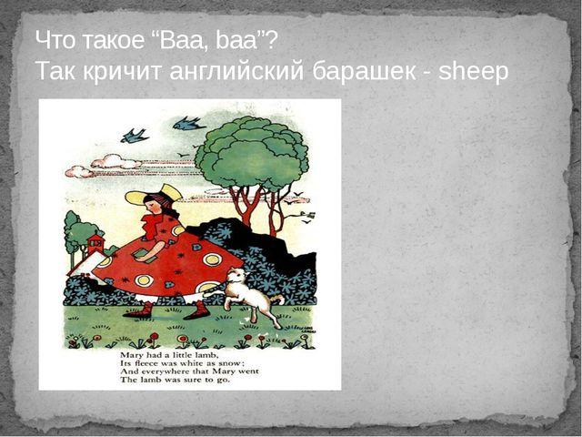 """Что такое """"Baa, baa""""? Так кричит английский барашек - sheep"""
