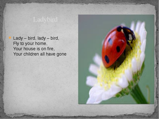 Ladybird Lady – bird, lady – bird, Fly to your home, Your house is on fire,...