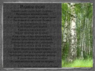 Родное село Давным-давно среди берёз кудрявых Раскинулась зелёная поляна. И и