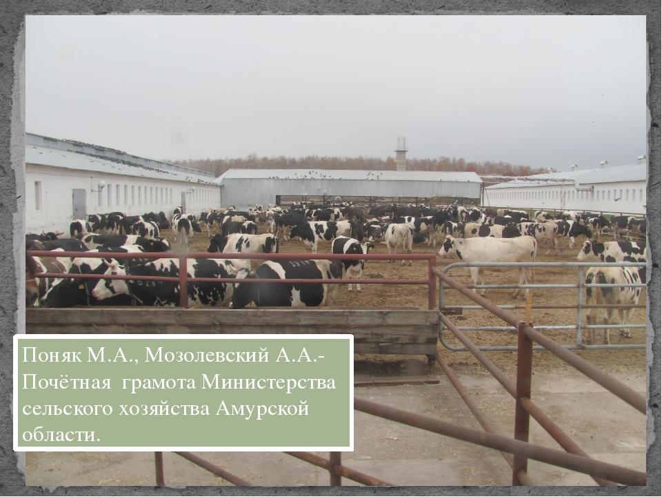 Поняк М.А., Мозолевский А.А.- Почётная грамота Министерства сельского хозяйст...