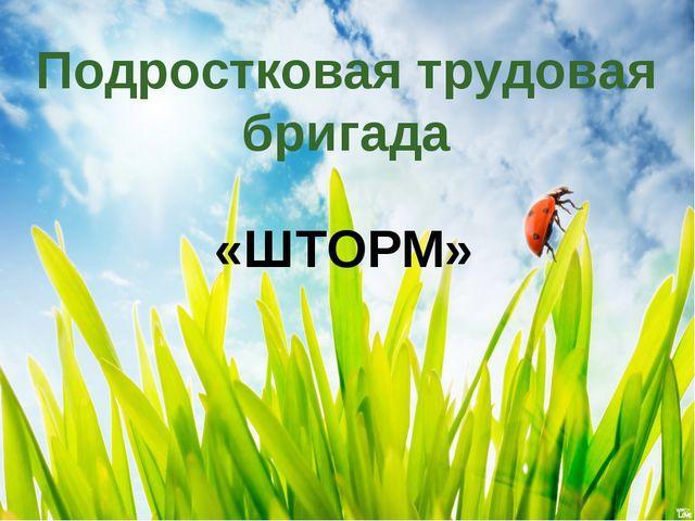 Подростковая трудовая бригада «ШТОРМ»