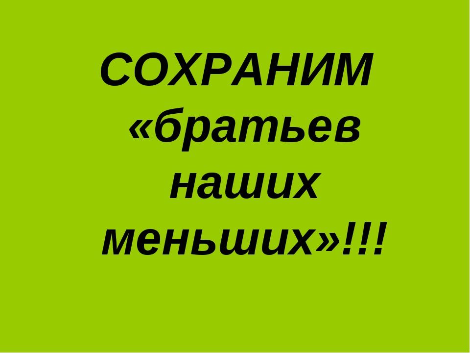 СОХРАНИМ «братьев наших меньших»!!!