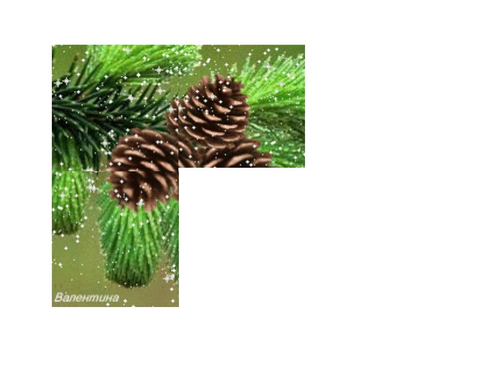 6. Теневыносливое растение? сосна ель лиственница