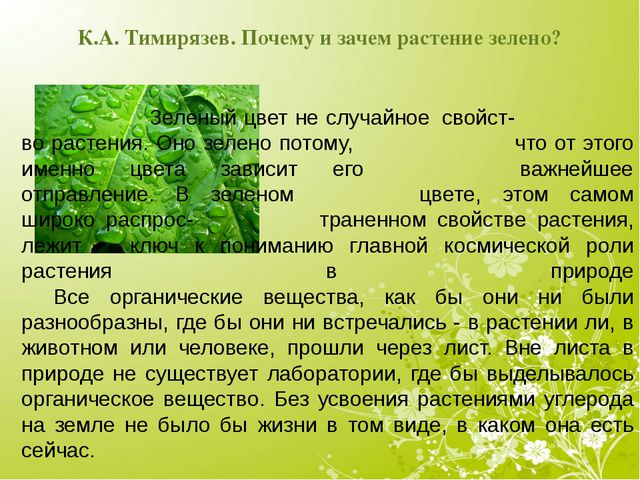 К.А. Тимирязев. Почему и зачем растение зелено? Зеленый цвет не случайное...