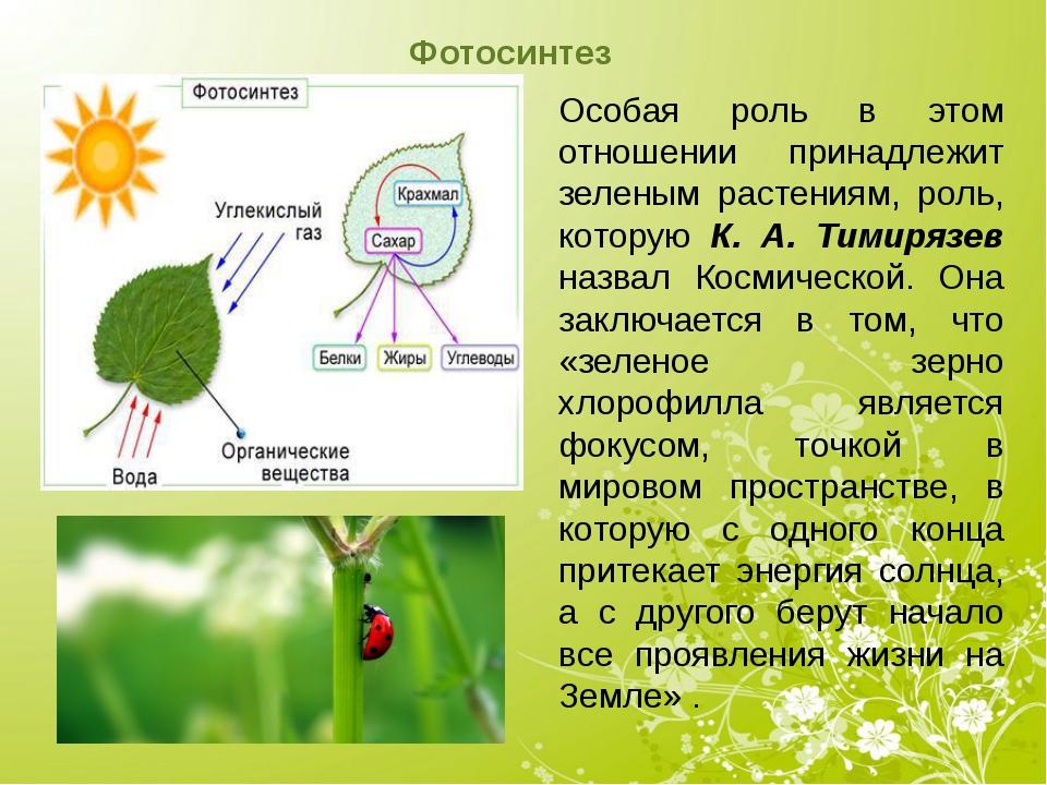 Фотосинтез Особая роль в этом отношении принадлежит зеленым растениям, роль,...