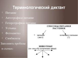 Терминологический диктант Питание Автотрофное питание Гетеротрофное питание У