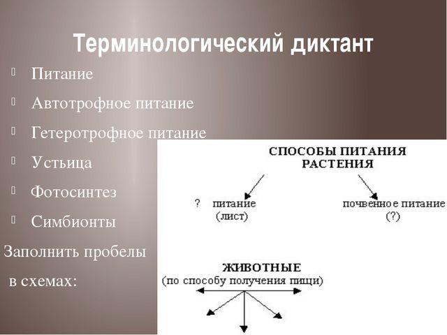 Терминологический диктант Питание Автотрофное питание Гетеротрофное питание У...