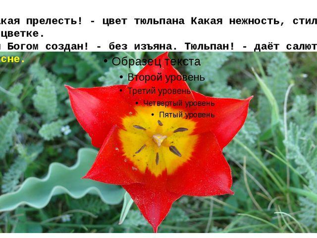 Какая прелесть! - цвет тюльпанаКакая нежность, стиль в цветке. Он Богом соз...