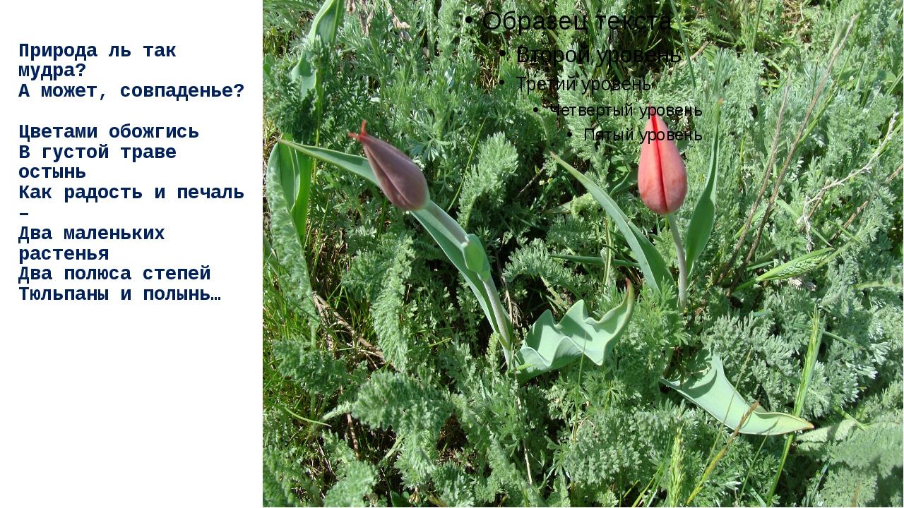 Природа ль так мудра? А может, совпаденье? Цветами обожгись В густой траве ос...