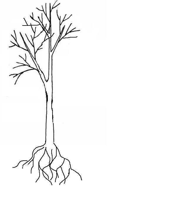 Дерево.jpg