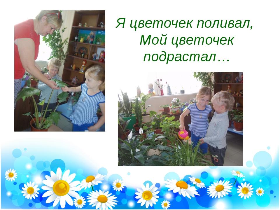 Я цветочек поливал, Мой цветочек подрастал…