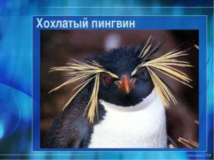 Николаева С.Б.® Хохлатый пингвин