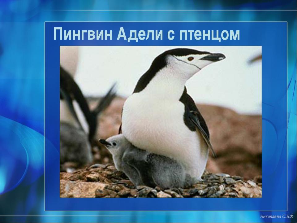 Пингвин Адели с птенцом Николаева С.Б.®