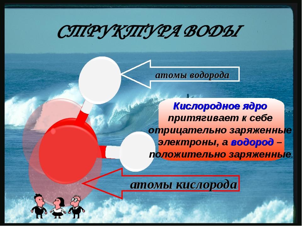 атомы водорода атомы кислорода Кислородное ядро притягивает к себе отрицател...