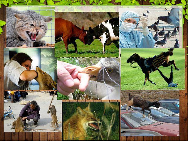 Все уровни пройдены. Теперь мы знаем ответ на вопрос, опасны ли животные? Ст...