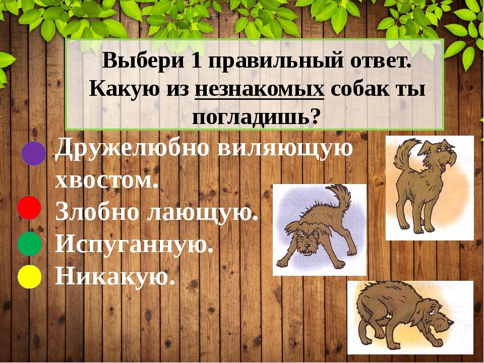 Выбери 1 правильный ответ. Какую из незнакомых собак ты погладишь? Дружелюбн...