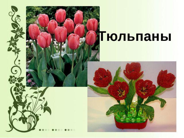 Тюльпаны
