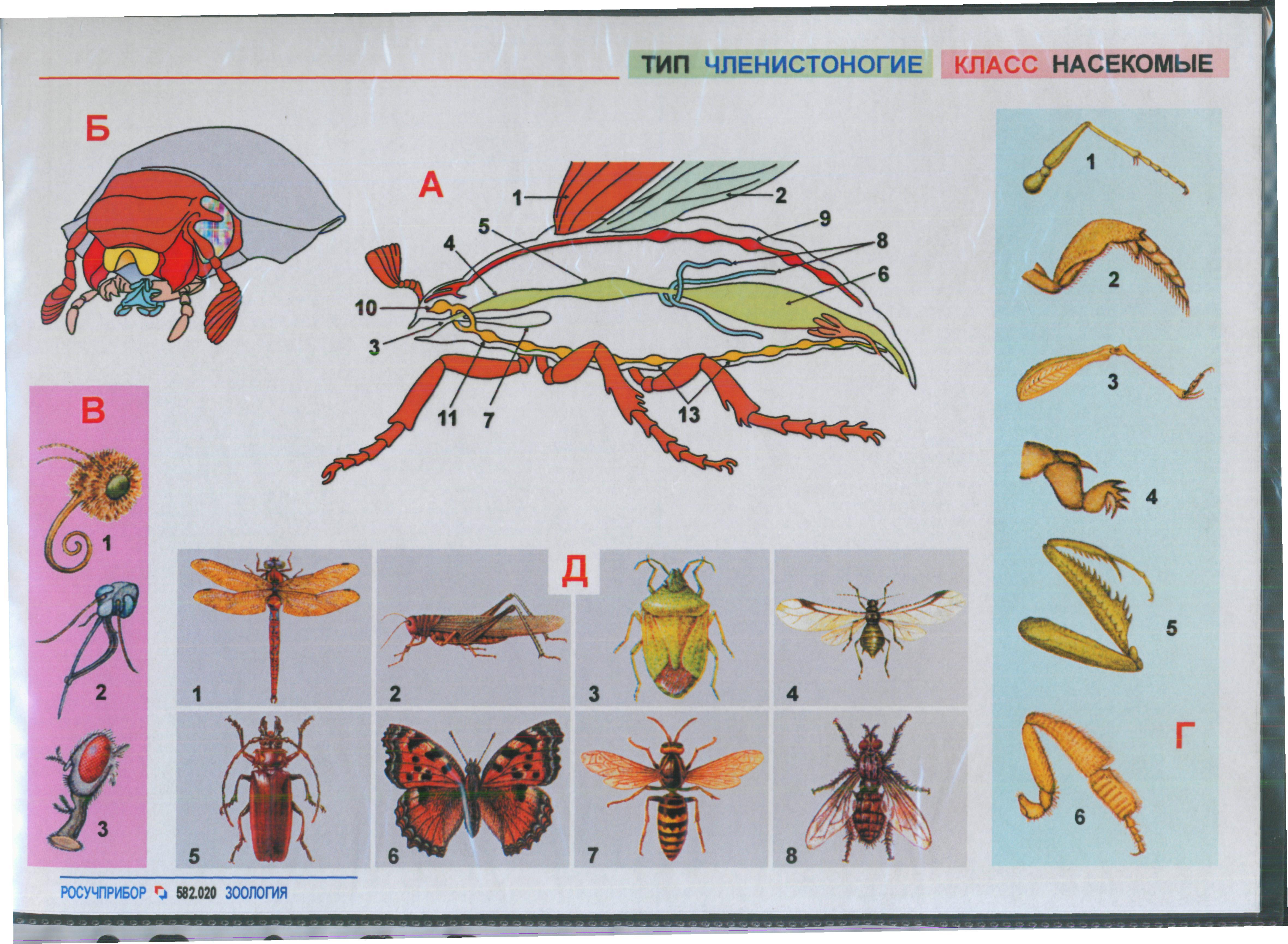 Биологии схема 7 класс животные