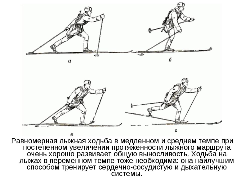 Равномерная лыжная ходьба в медленном и среднем темпе при постепенном увеличе...