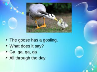 The goose has a gosling. What does it say? Ga, ga, ga, ga All through the day.