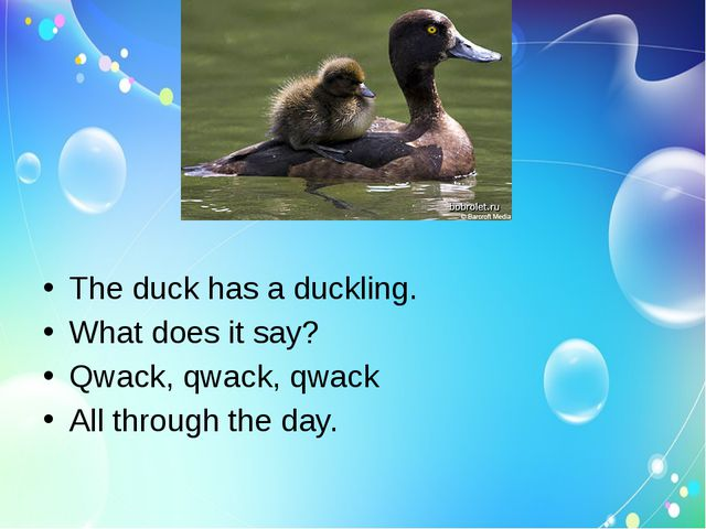 The duck has a duckling. What does it say? Qwack, qwack, qwack All through t...
